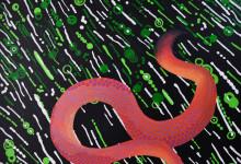 Psychodelic Worms /Gusanos psicodélicos